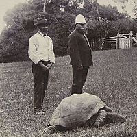 http://upload.wikimedia.org/wikipedia/commons/thumb/e/eb/Jonathan-the-tortoise-1900.jpeg/200px-Jonathan-the-tortoise-1900.jpeg