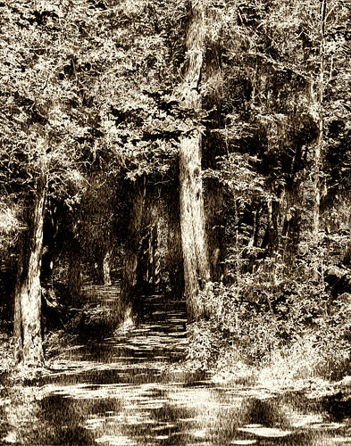 Orillia Forests - Woodcut; an artistic interpretation of a forest lane at Bass Lake Provincial Park