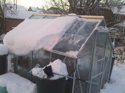 Allotment snow Jan 10 no 6