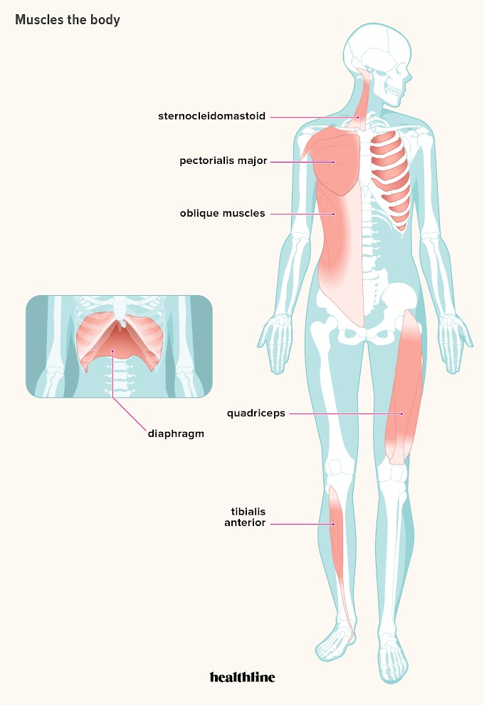 Upper Thigh Connect To Torso. What Area Of Body : Parts Of The Body In English Youtube - Beneath this area is called the armpit or the ankle connects the foot to the leg.