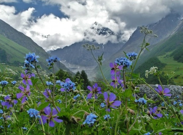 Valley of Flowers in the Himalayas, India tourism destinations