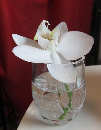toisen orkidean viimeinen kukka