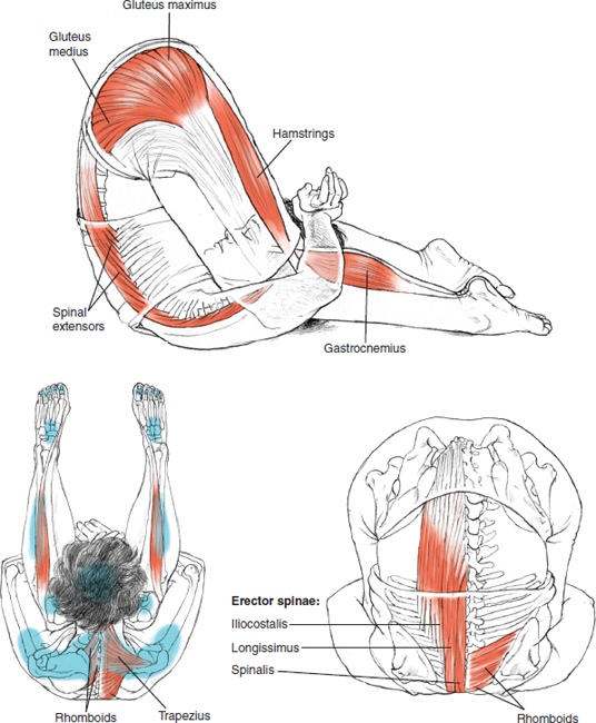 Karnapidasana Ear-to-Knee Pose © Leslie Kaminoff's Yoga Anatomy  B E N E F I T S — Calms the brain — Stimulates the abdominal organs and the thyroid gland — Stretches the shoulders and spine — Helps relieve the symptoms of menopause — Reduces stress and fatigue — Therapeutic for backache, headache, infertility, insomnia, sinusitis  ❤ Yoga Inspiration Buy this book here http://amzn.to/1ctMdtp Yoga Inspiration on FB and IG