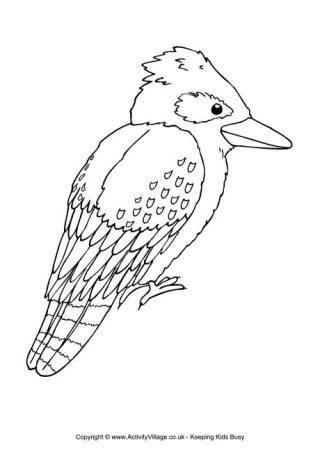 kookaburra colouring page aussie  days  xmas