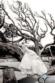 jekyll island weddings driftwood beach   Jekyll Island