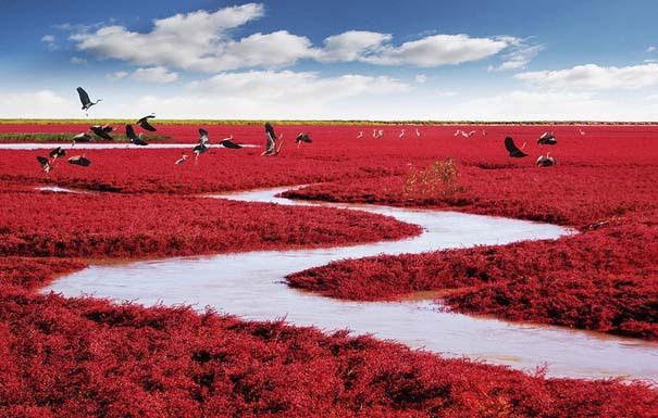 Η εκπληκτική Κόκκινη Παραλία στο Panjin της Κίνας (1)