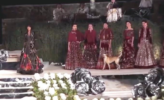 Un perrito callejero se roba el espectáculo en un desfile y las modelos no saben cómo reaccionar