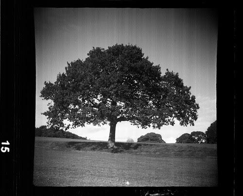 the third tree by pho-Tony