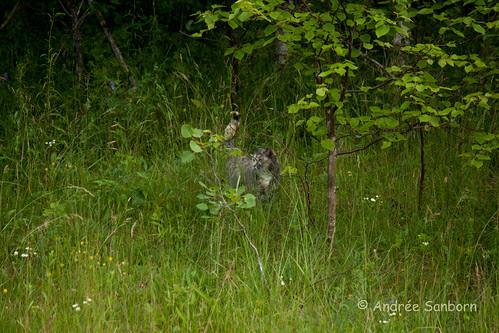 Possum Takes a Hike-3.jpg