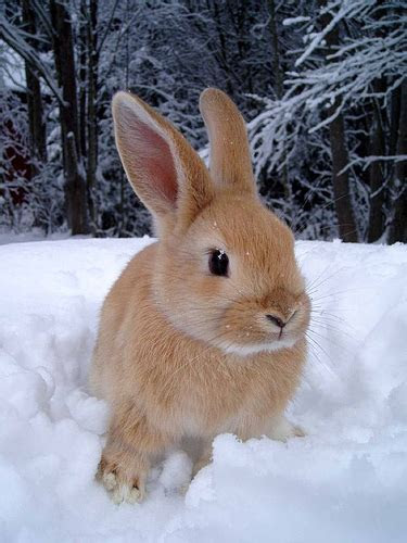 Tiny Bunny in Snow   Adorable Animals For Lois