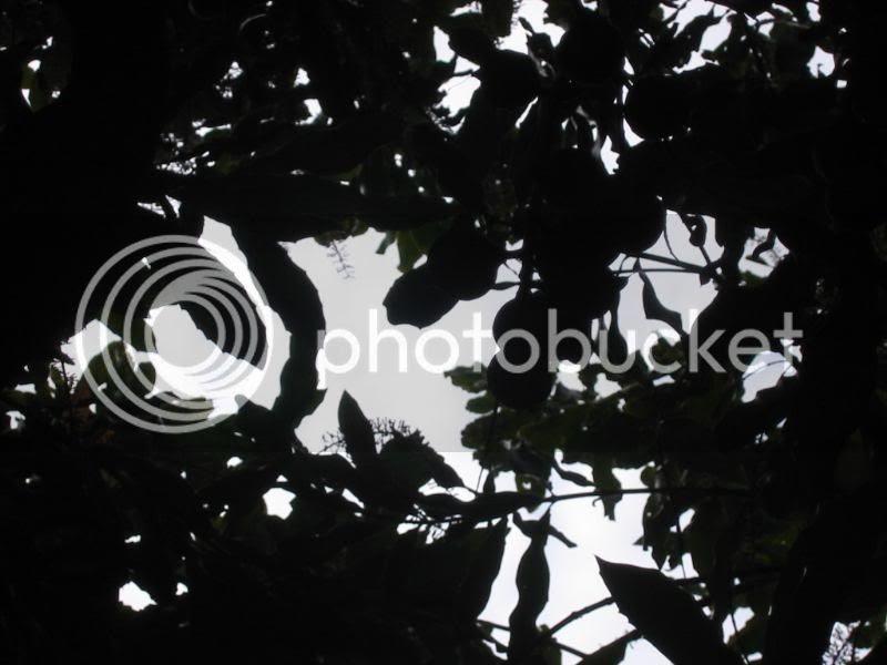 Nut in silhouette