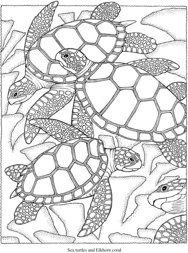 Ocean Coloring Pages For Adults - Bilscreen
