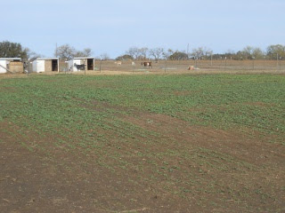 Turnips 2012 Dec 17