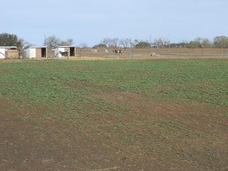 Turnips 2012 Dec 17