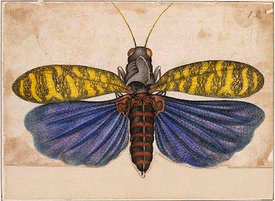 yellow and purple locust