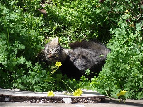 A cat in sorrel