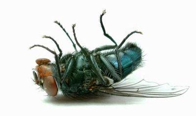 Die Fliege am Ende