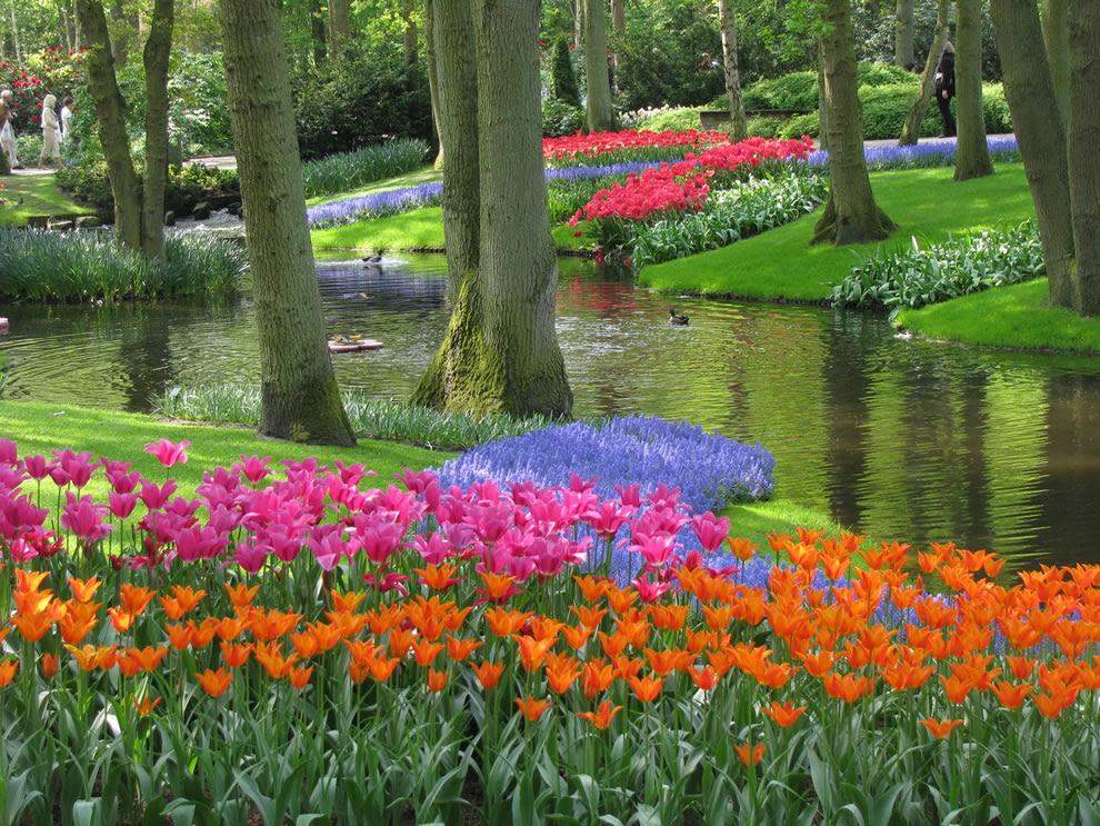 Τουλίπες στο Keukenhof, επίσης γνωστός ως ο Κήπος της Ευρώπης