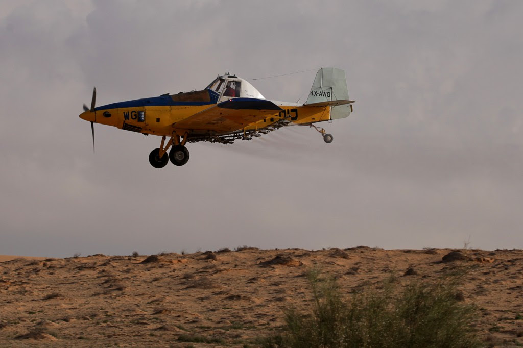 A crop-dusting plane sprays a field in Israel's Negev Desert, Wednesday (photo credit: Dror Garti/Flash90)