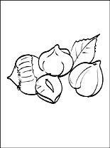 Hazelnut Coloring Page Coloring Pages