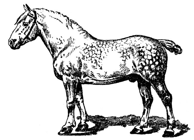 Draft horse clipart - Clipground