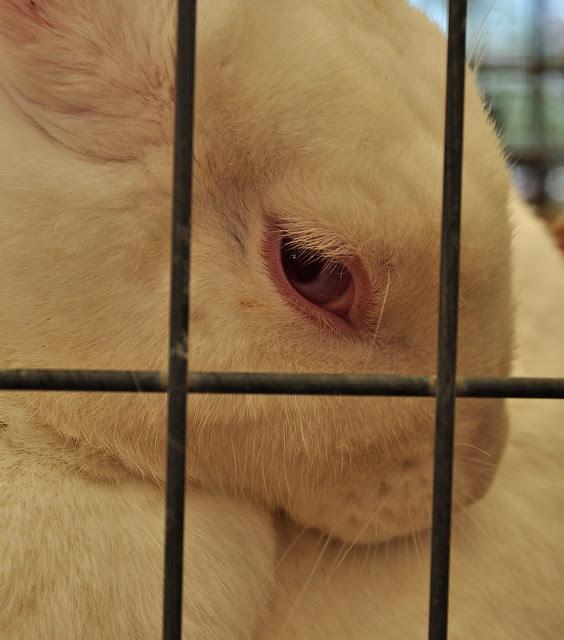 Bunny Eye