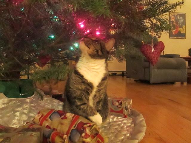 Murderface admiring the tree