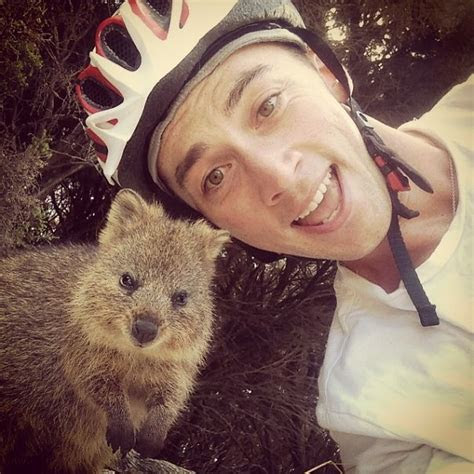 Quokka Selfie Is Cutest Trend In Australia Right Now   Bored Panda
