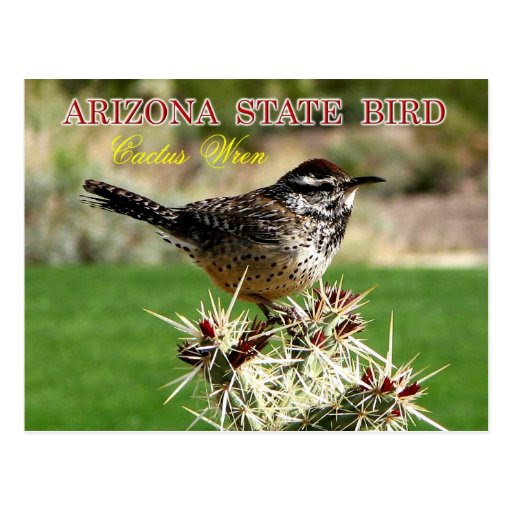 arizona_state_bird_cactus_wren_postcard r14cf0334fa194b0aa958a8513df8ee15_vgbaq_8byvr_512