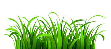 gambar leaf clipart transparent background clipground png