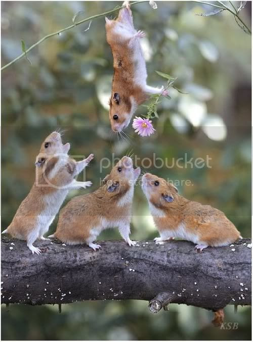 rodents Pictures, Images and Photos