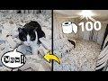 Vídeo: Gatinho fica alucinado em sala cheia de papel higiênico e vídeo viraliza