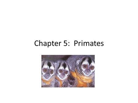 Living Primates Part 2 Non Human Primate Social Groups