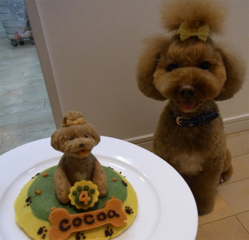 Birthday Cake On Tokyo Will Make A For Your Dog Not Just