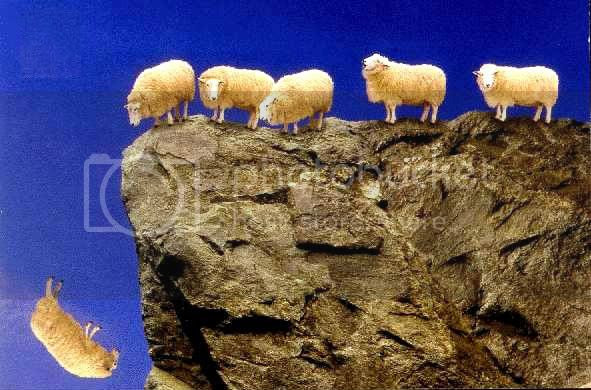 sheep_off_cliff.jpg picture by robertretallick