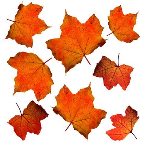 fall leaves leaf  photo  pixabay