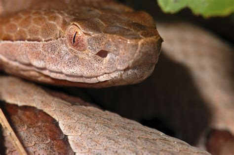 Deterring Snakes   How To Get Rid Of Snakes In Your Yard