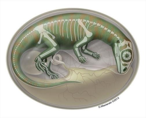 Artist's impression of embryonic Lufengosaurs.  Credit:  D. Mazierski