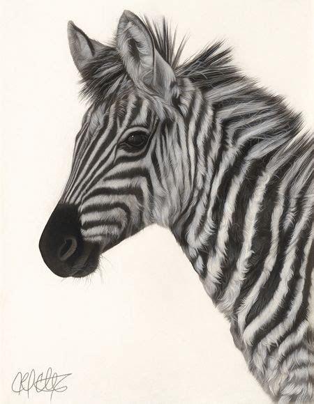 drawing   baby zebra amazing art pinterest babies