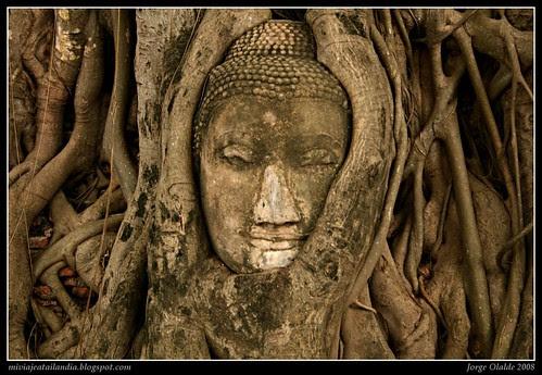 Buda entre las raíces, Tailandia