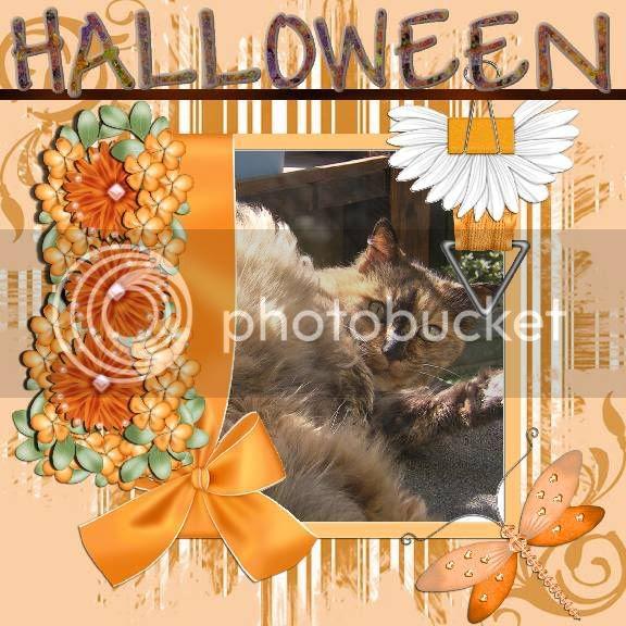 Domestic Cat,Autumn