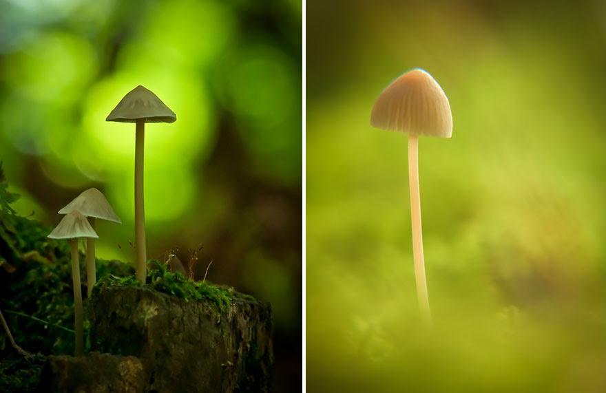 mushroom-photography-vyacheslav-mishchenko-18