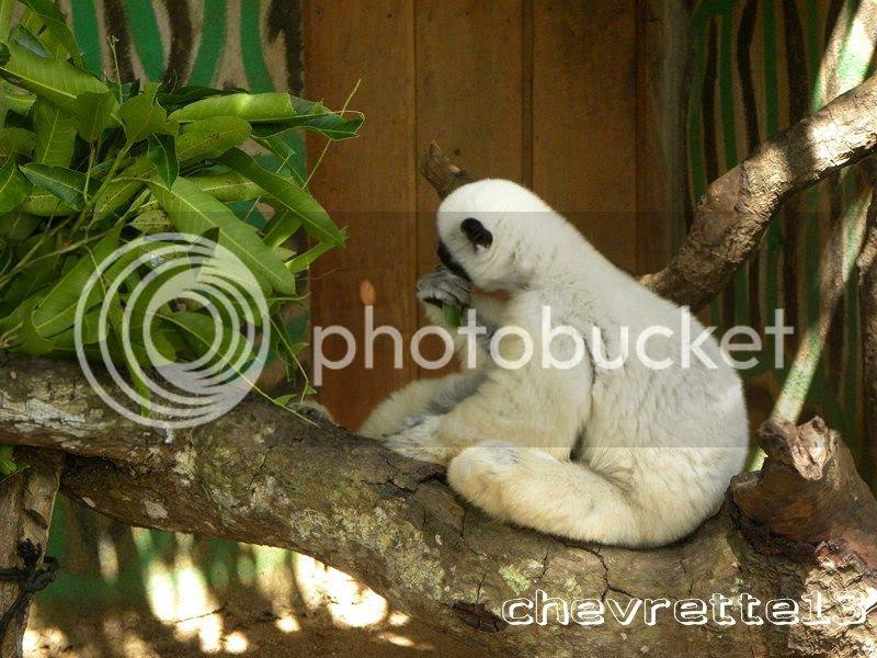 http://i1252.photobucket.com/albums/hh578/chevrette13/Madagascar/DSCN3028Copier_zps0b52d869.jpg
