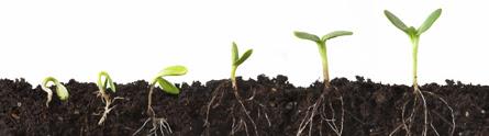 PlantrootsComms