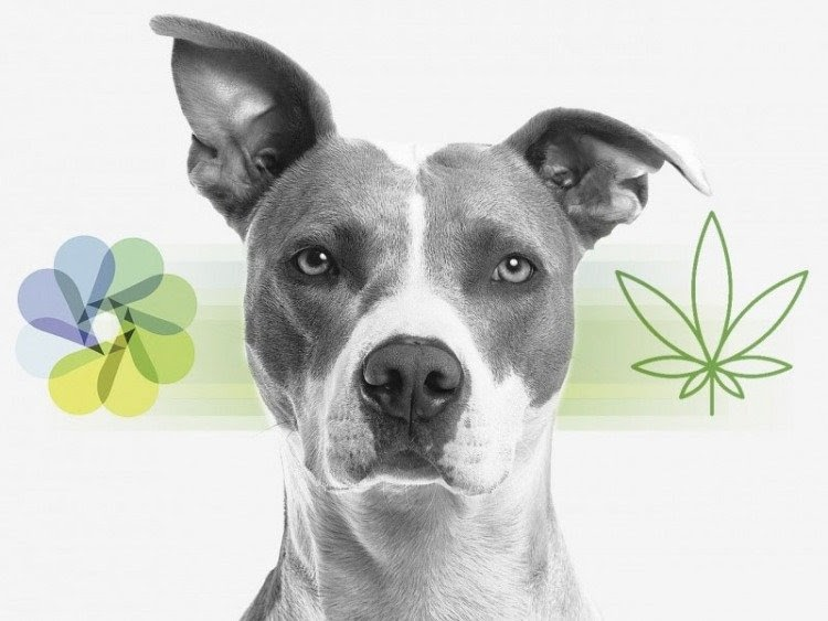 Life With Dogs: CBD Oil and Dog Seizures
