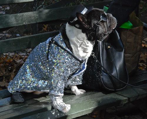 October 25, 2009 at Tompkins Square Dog Run in New York City.