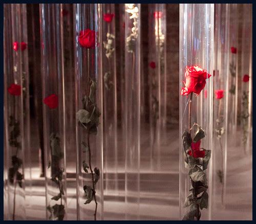 rode rozen by hans van egdom