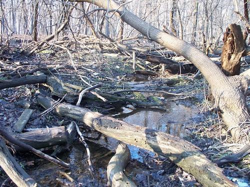 3.29.2009 River Grove (47)