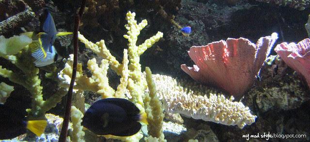 Denver Aquarium 5