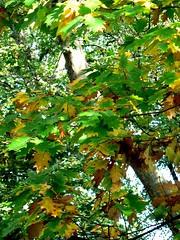 belgrave-square-leaves